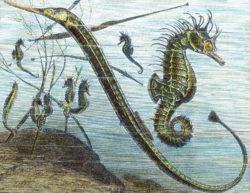 Carl Simon: Living in the sea, twentieth century