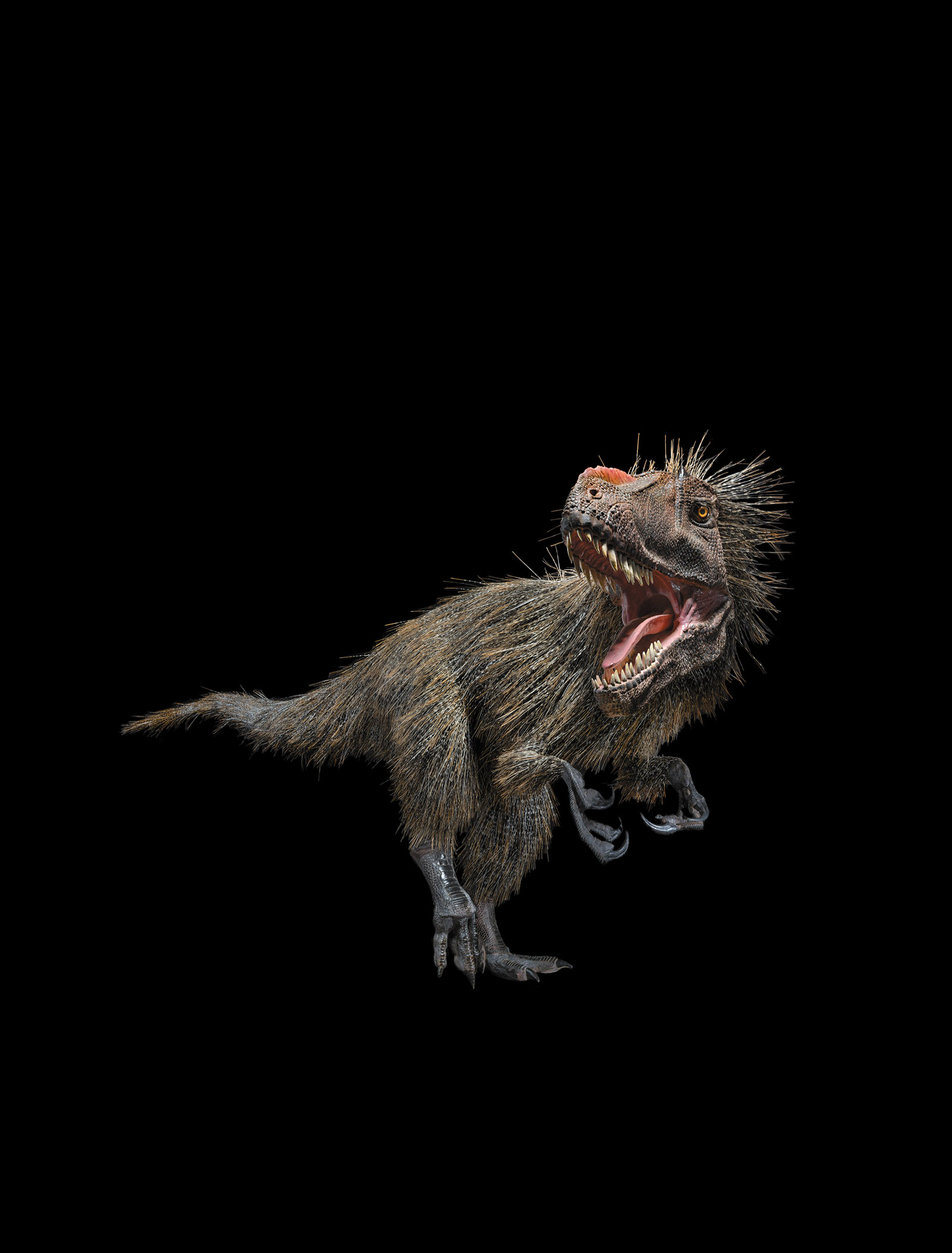 A life-size model of the early Cretaceous tyrannosaur