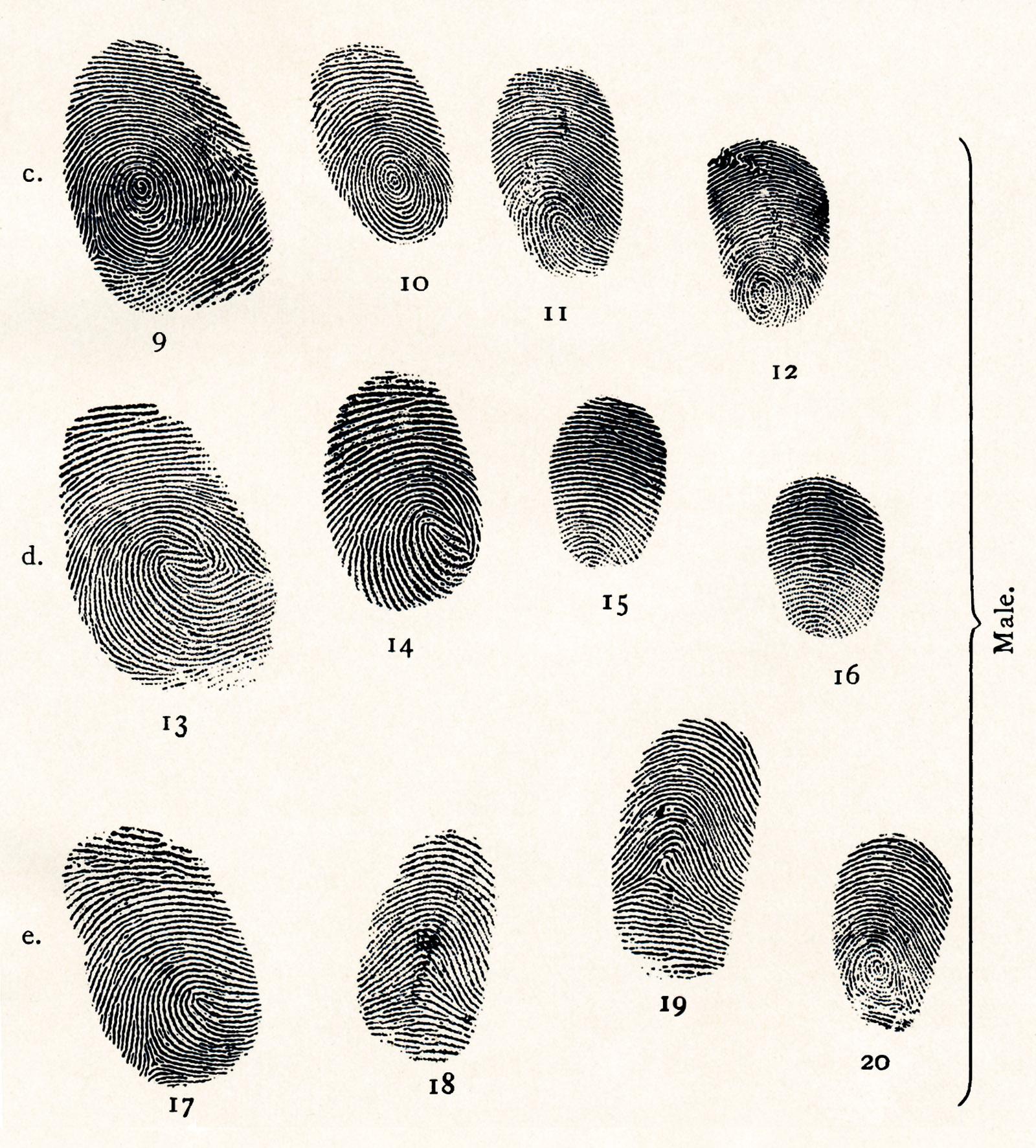 Illustration from Henry Faulds's Guide to Finger-print Identification, 1905