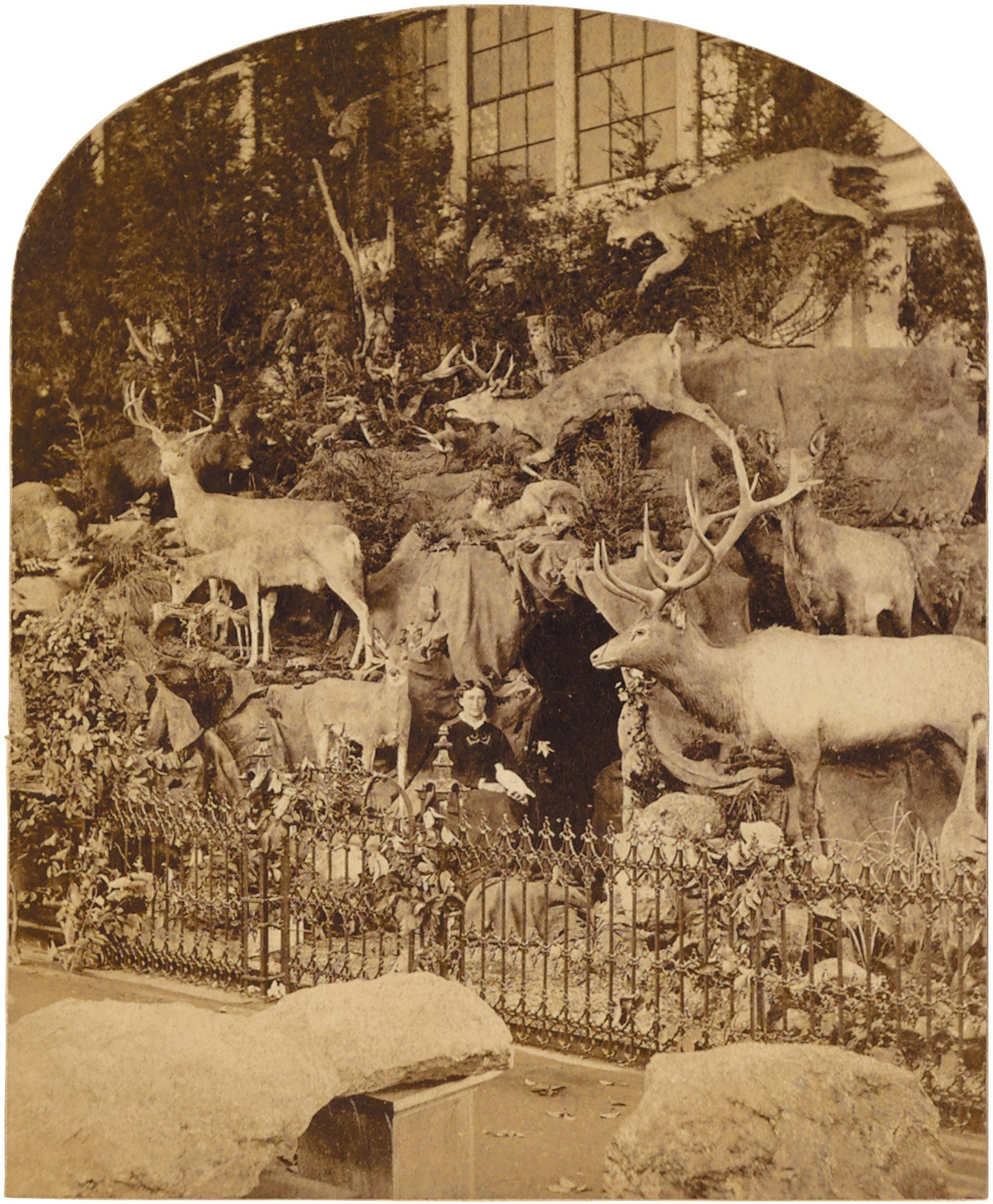 A stereographic souvenir card showing a display of showing a display of the naturalist Martha Maxwell's wildlife specimens