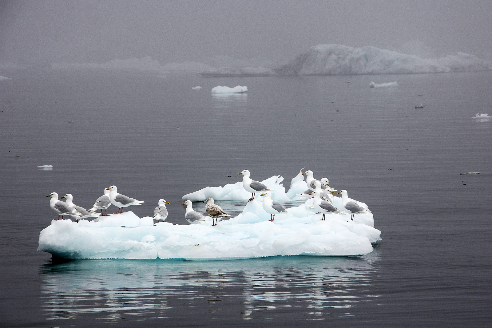 Photograph of birds on an iceberg in Greenland
