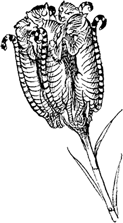 Drawing by Edward Lear