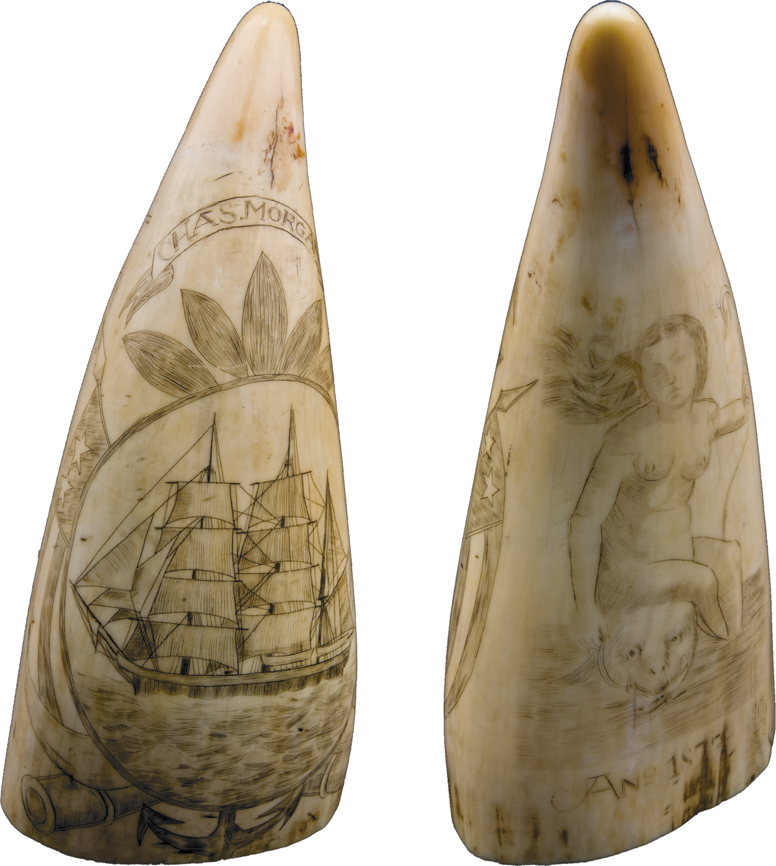 A scrimshaw tooth showing a sailing ship, a woman and sea monster, 1879