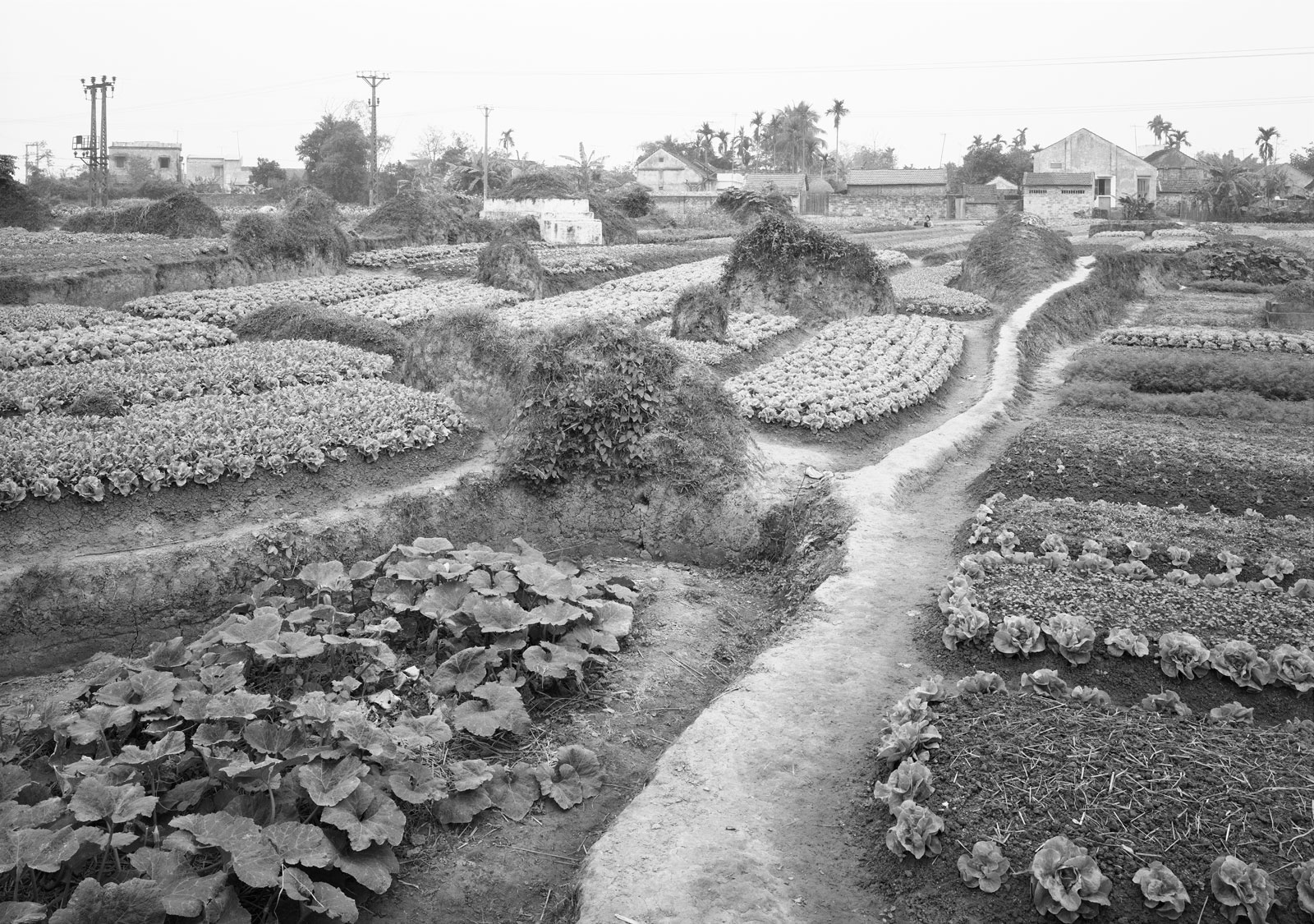A winding road between fields, in black and white