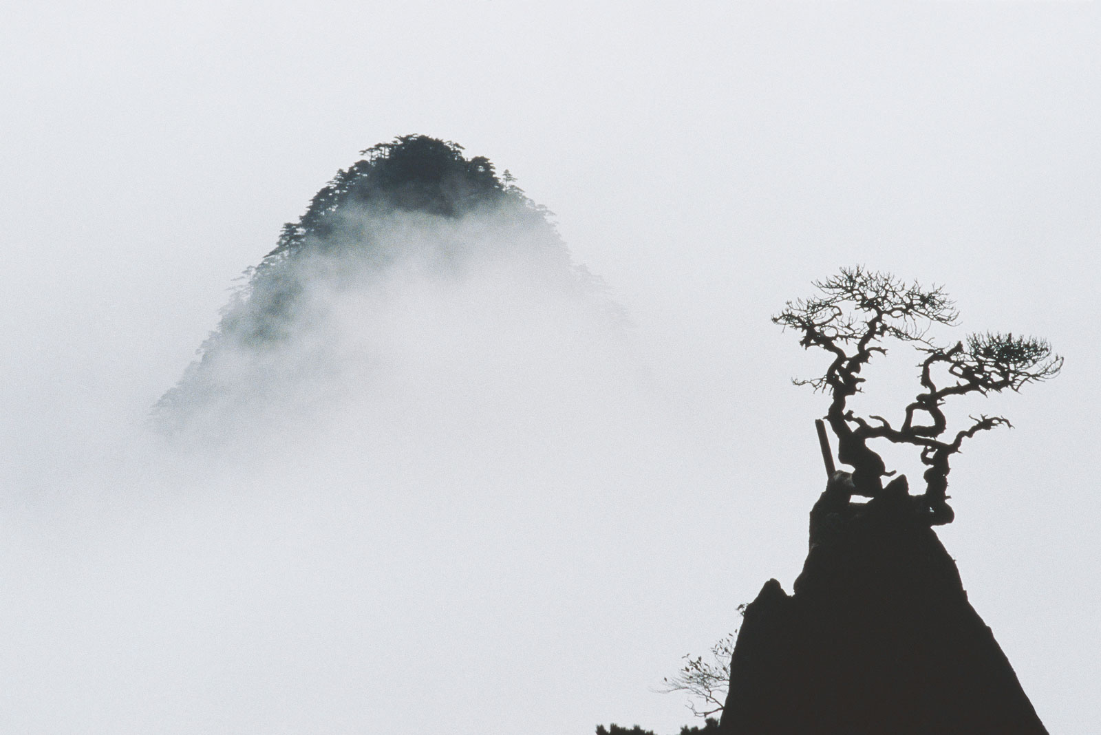 stark black and white image of a tree and mountain almost fully obscured by fog