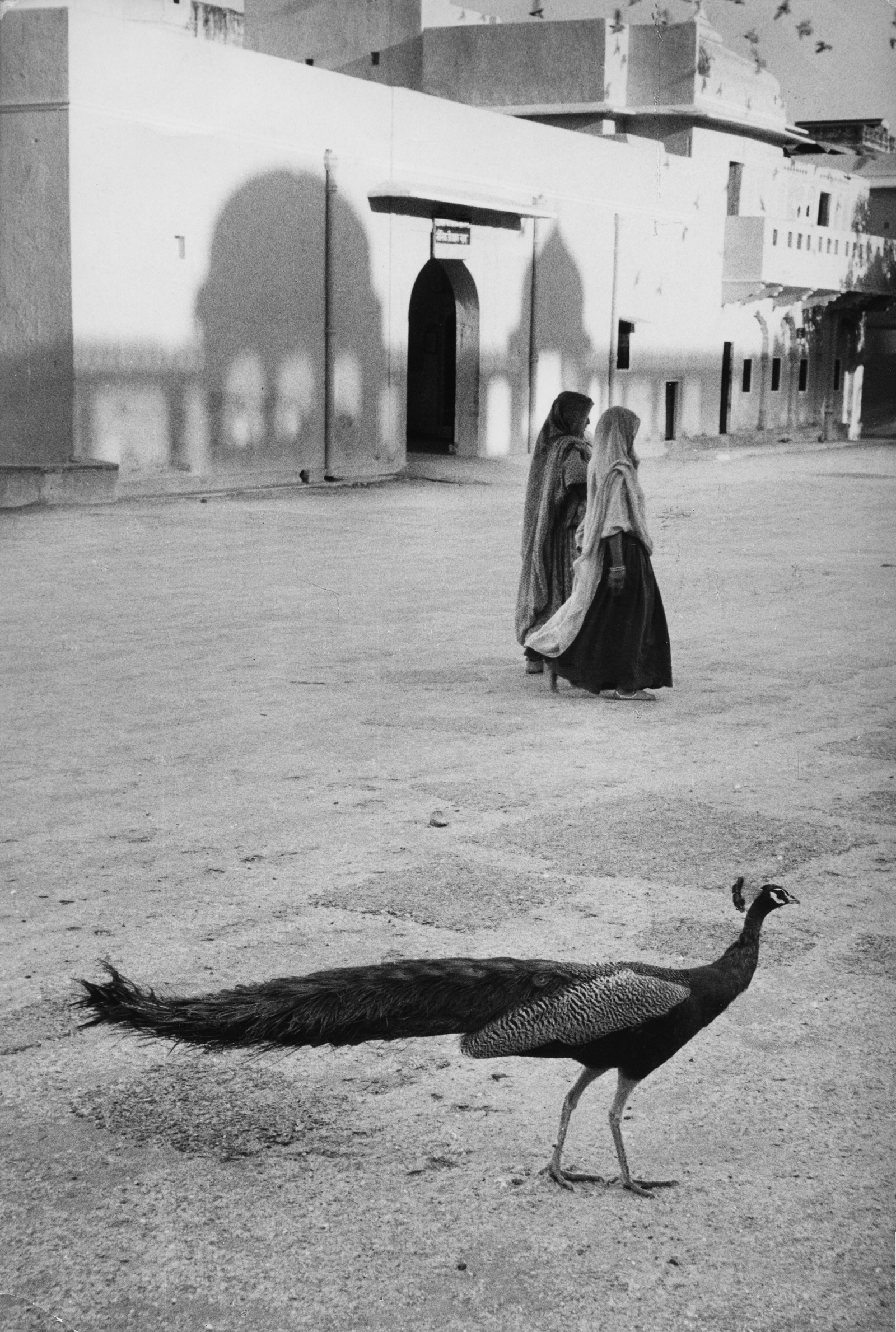 black and white image of a peacock, with two women and the shadows of buildings behind it