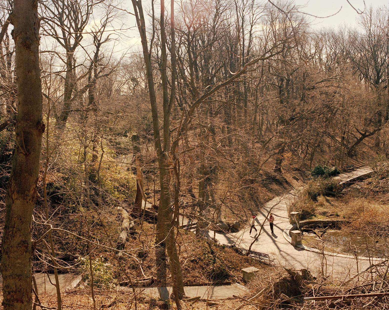brown wooded winter landscape showing a path in the park with two faraway figures