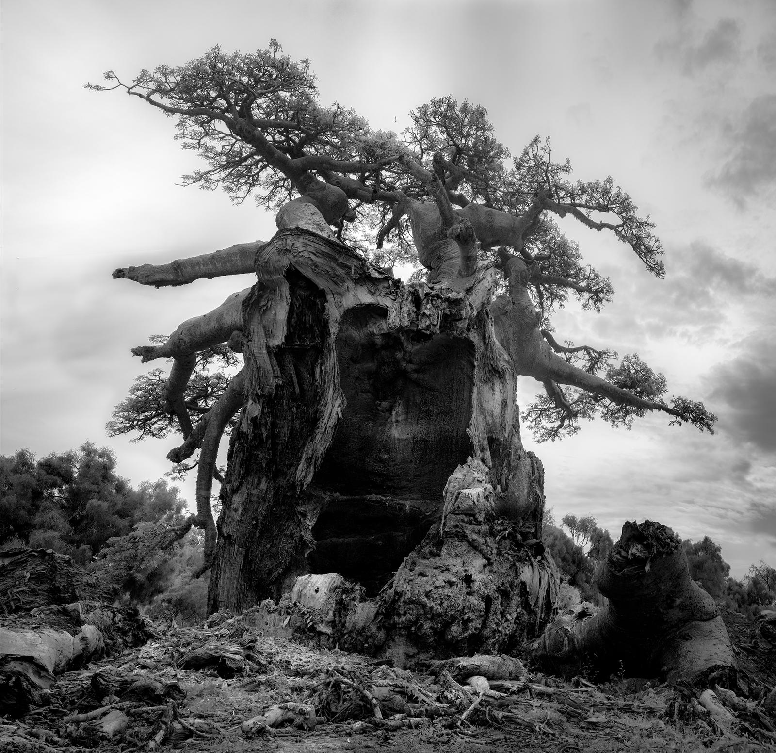 Tsitakakoike, Day; photograph by Beth Moon from her book Baobab