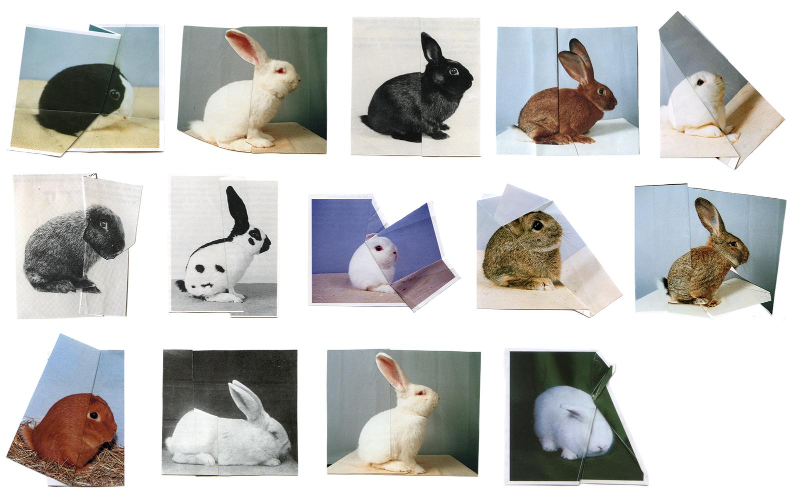 Konijnen (Bunnies); artwork by Ruth van Beek